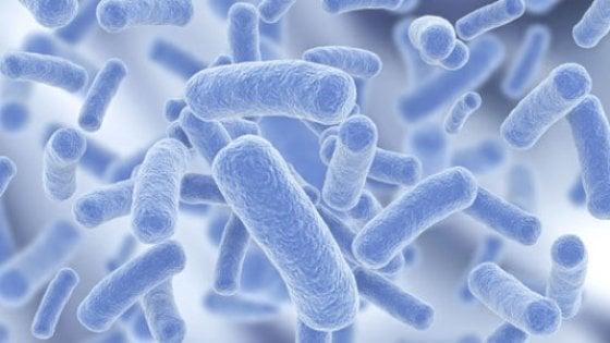 Legionella, allarme in Lombardia. Il batterio si annida in acqua e aria condizionata