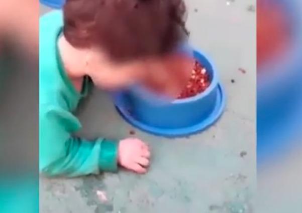 mamma costringe bimbo a mangiare come cane 07142608 1 - Video choc: Bimbo di due anni con difficoltà di apprendimento costretto dalla mamma a mangiare il cibo del cane nella ciotola!